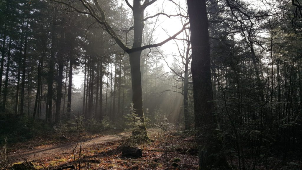 Het enge bos - omgeving