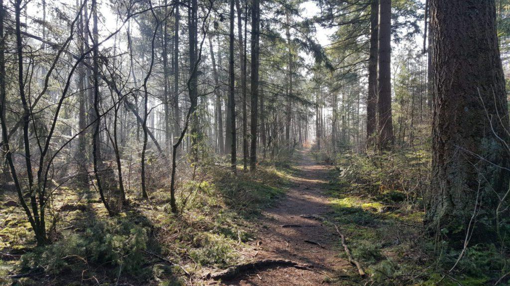 Het enge bos - wandeling
