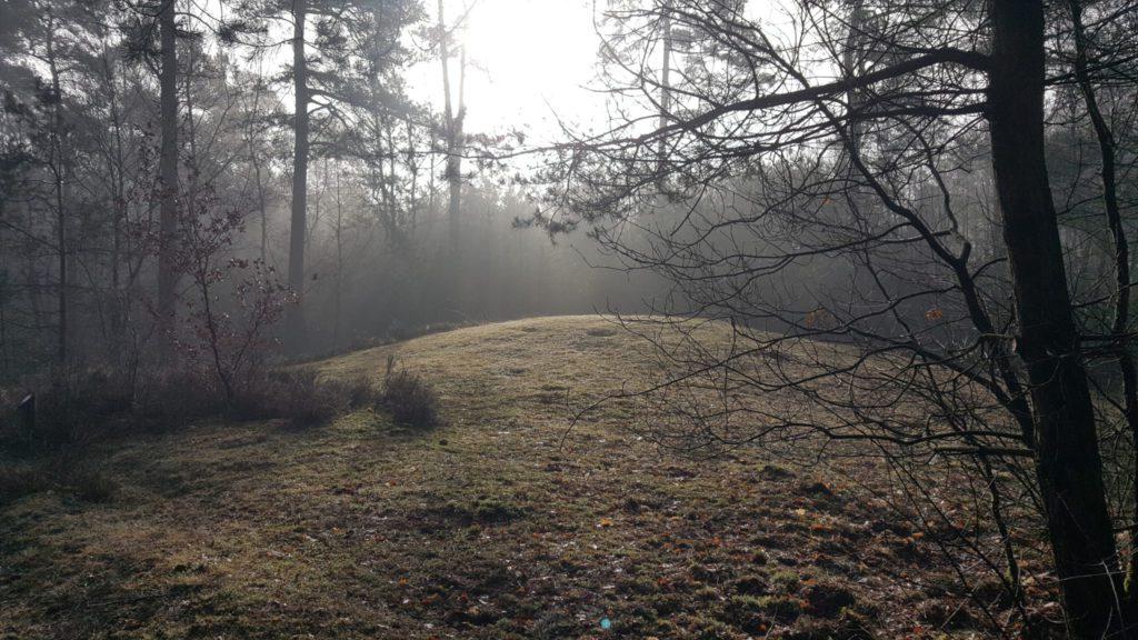 Het enge bos - wandeling bos