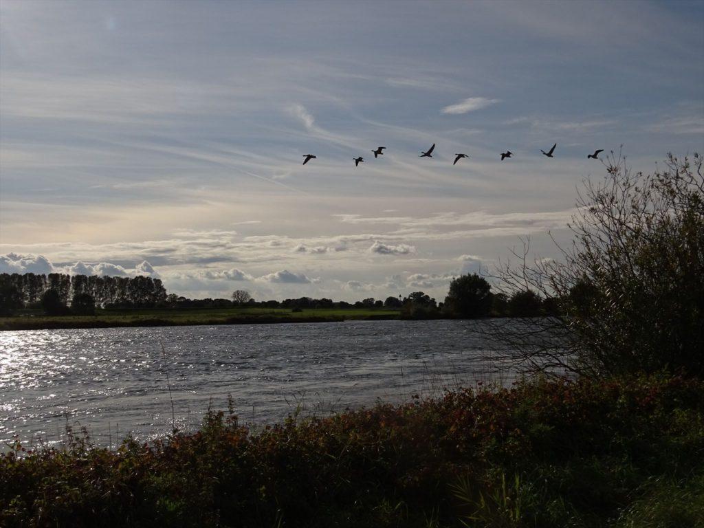 Geocaching Zwolle - Struinen langs de IJssel