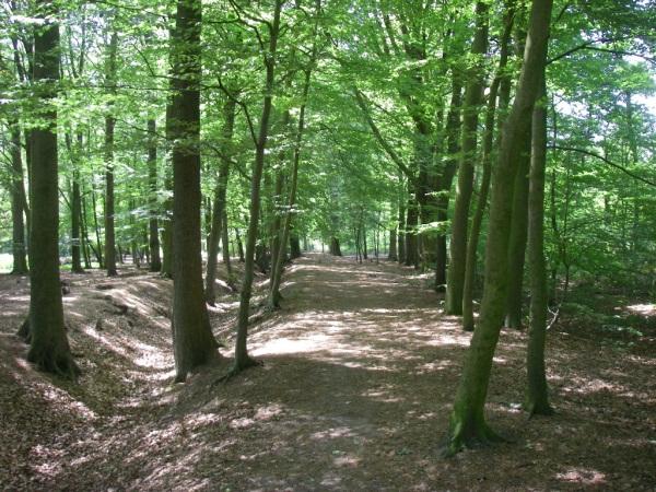 Geocaching Apeldoorn - bos